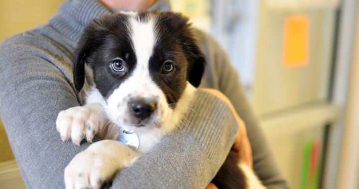 Udruženje Alfa: Kada ljubav prema životinjama preraste u aktivizam